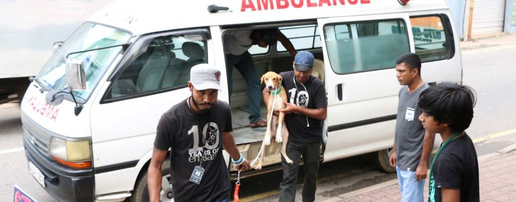 embark animal ambulance